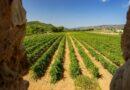 CorSalvatge, el vino mássalvaje de Clos Cor Ví